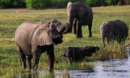 Global hubbub as Botswana lifts hunting suspension