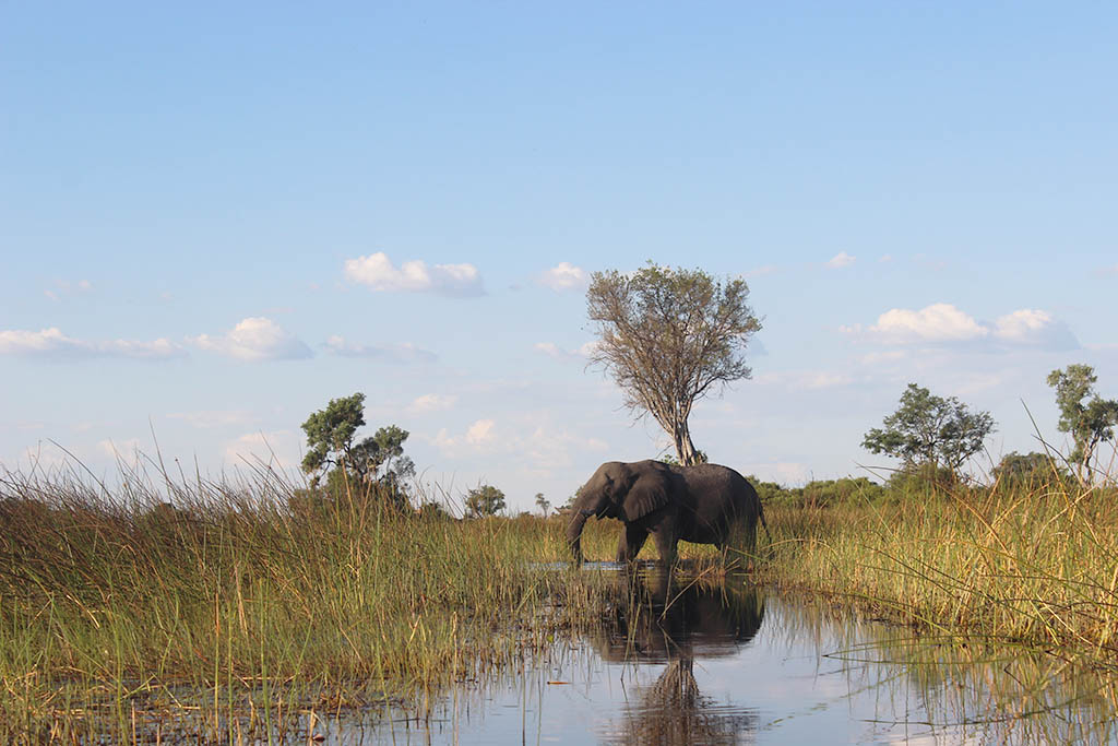 Khama calls for responsible, sustainable tourism