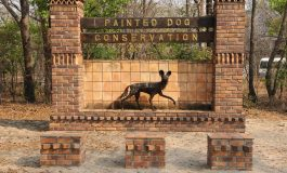Wilderness Safaris Partners with Painted Dog Conservation