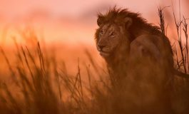 Lionscape Coalition wins 'Pure Life Experiences Award' for conservation and sustainability