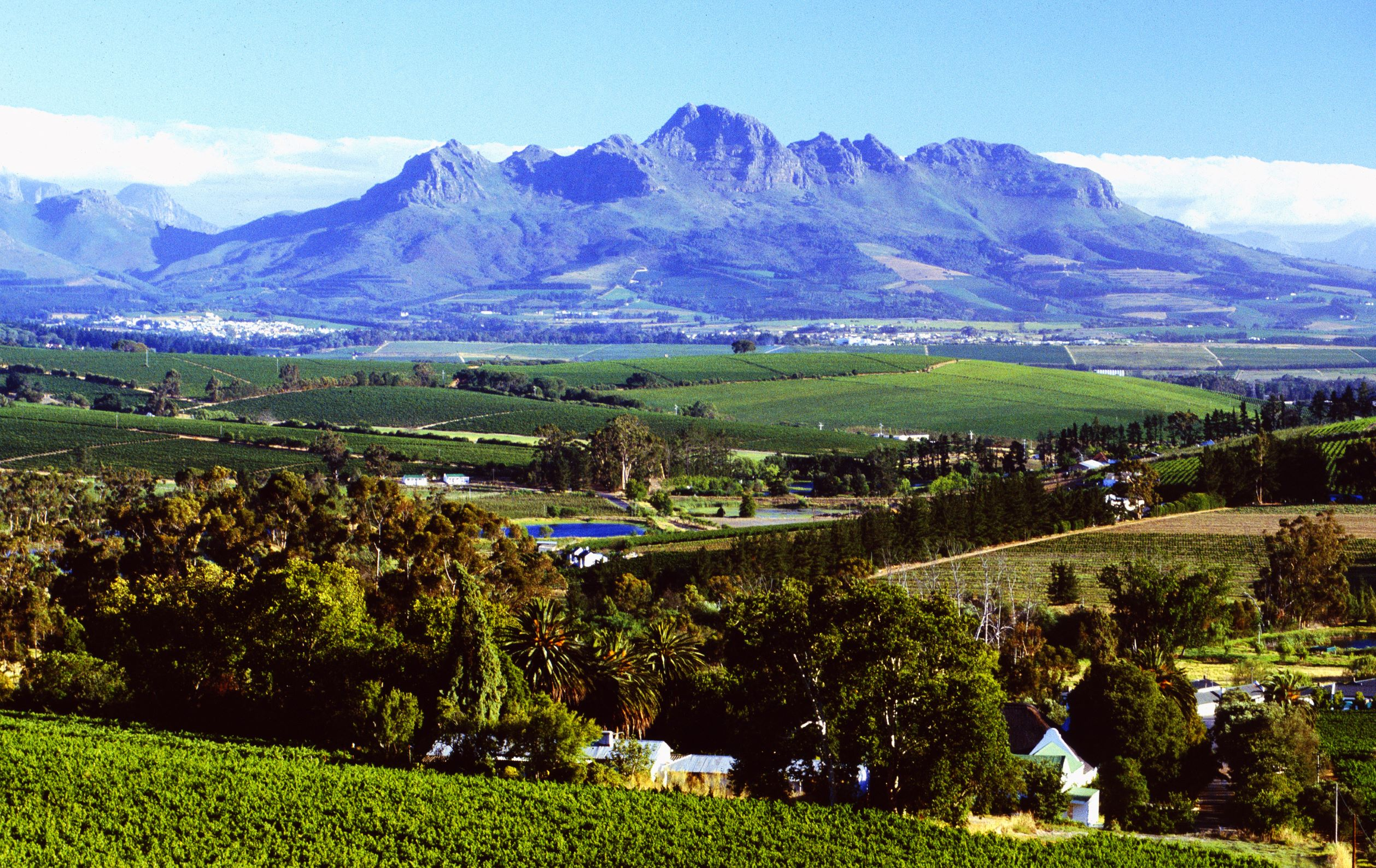 Visit Stellenbosch launches initiative to drive swift recovery of local business