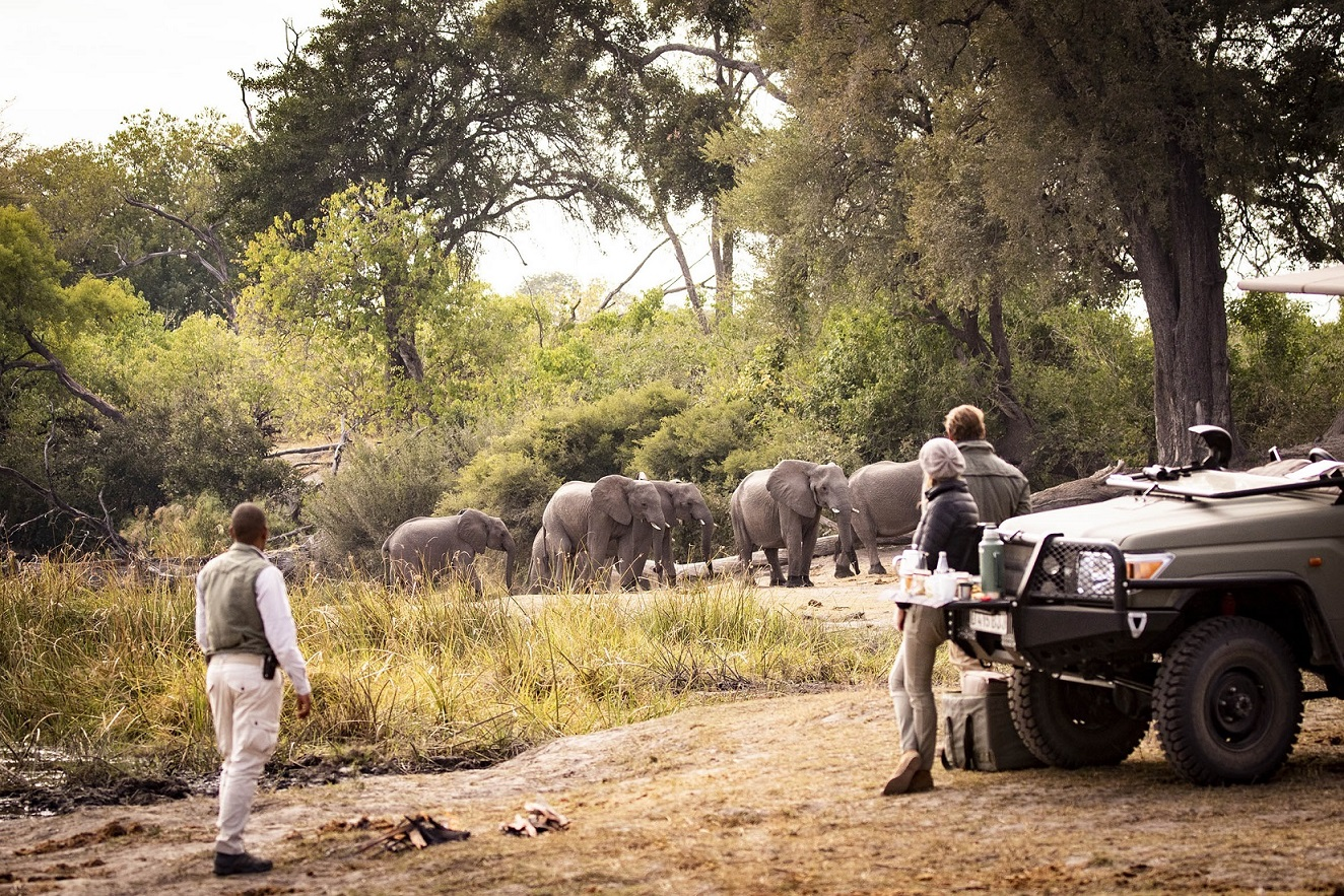 Life-changing Wilderness Safaris journey offers a lifeline for Linyanti elephants